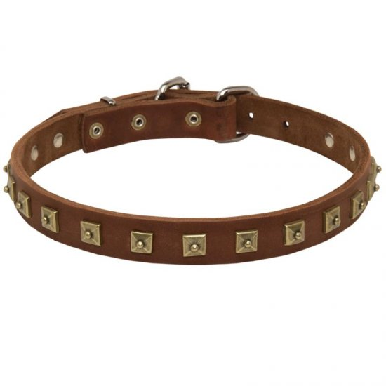 Handcrafted Leather Belgian Malinois Collar with Square Studs