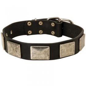 Leather Belgian Malinois Collar with Large Nickel Plates