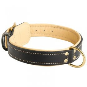 Padded Leather Belgian Malinois Collar