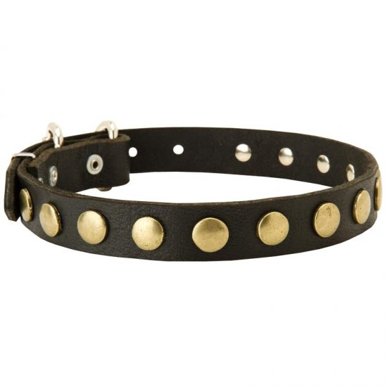 Leather Belgian Malinois Collar with Brass Circles for Fashionable Walking