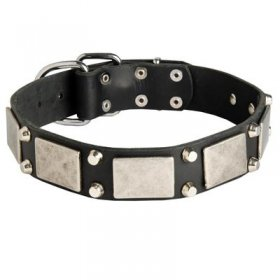 Leather Belgian Malinois Collar Decorated with Nickel Cones and Plates