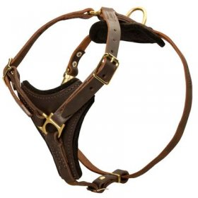 Tracking Leather Belgian Malinois Harness With Y-Chest Plate