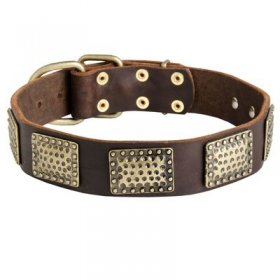 Leather Belgian Malinois Collar with Massive Brass Plates