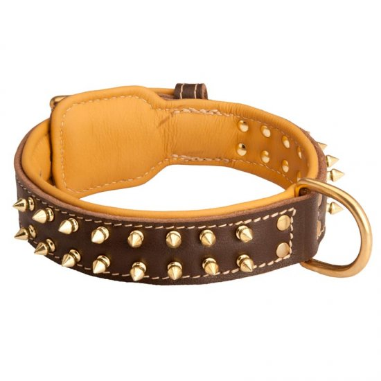 Spiked Belgian Malinois Collar Padded with Nappa Leather