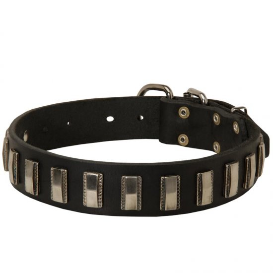 Belgian Malinois Leather Collar with Shiny Plates