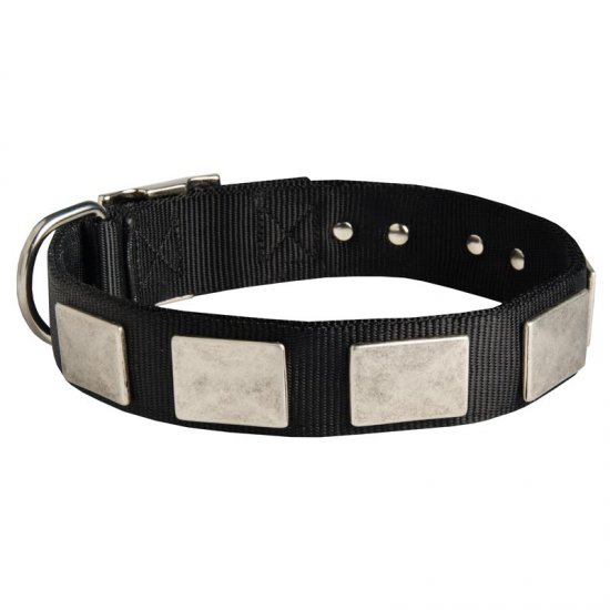 Nylon Belgian Malinois Collar Massive Nickel Plates