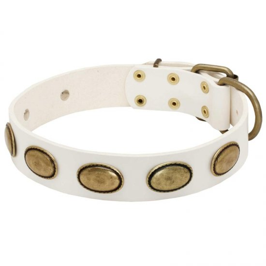 White Leather Belgian Malinois Collar with Brass Oval Plates