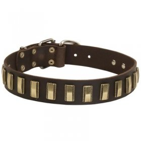 Leather Belgian Malinois Collar with Awesome Brass Plates