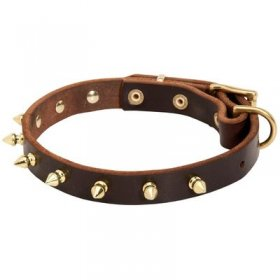 Designer Leather Belgian Malinois Collar with Brass Spikes
