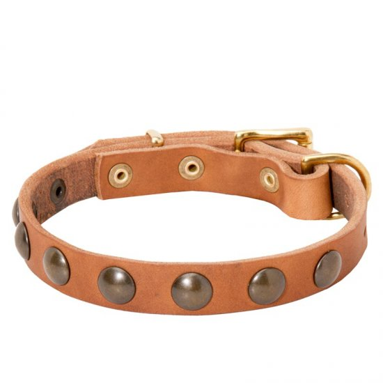 Leather Belgian Malinois Collar with Brass Half-Ball Studs