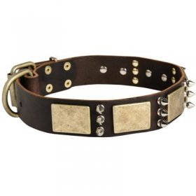 Designer War-Style Leather Belgian Malinois Collar with Spikes and Plates