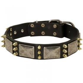 Spiked Leather Belgian Malinois Collar with Nickel Plates