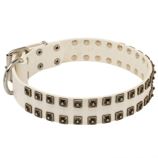 White Leather Belgian Malinois Collar with Old Nickel Square Studs for Daily Dog Walking - NEW OFFER