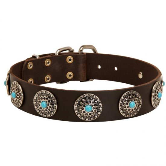 Leather Belgian Malinois Collar with Blue Stones for Stylish Walking