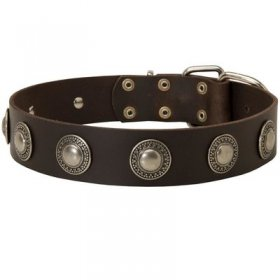 Leather Belgian Malinois Collar Decorated with Silver Conchos
