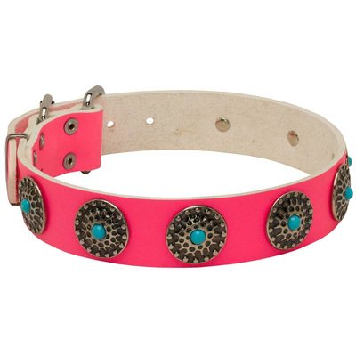 Pink Leather Belgian Malinois Collar with Circles for Dog Walking