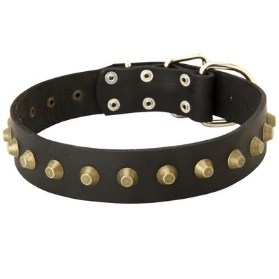Leather Belgian Malinois Collar with Brass Pyramids