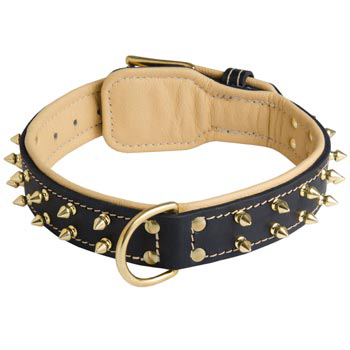 Padded Leather Belgian Malinois Collar Spiked Adjustable for Training