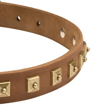 Leather Dog Collar for Belgian Malinois with Studs