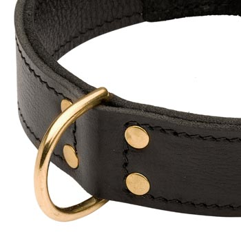 Brass D-ring Stitched to Leather Belgian Malinois Collar