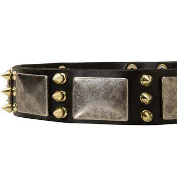 Stylish Leather Dog Collar for Belgian Malinois