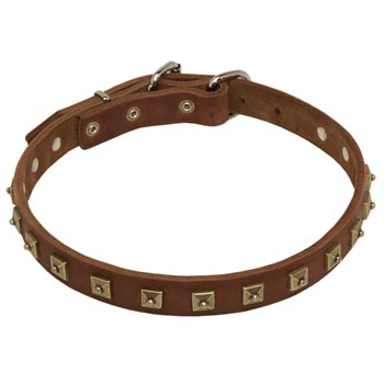 Belgian Malinois Leather Collar For Walking And  Training in Style