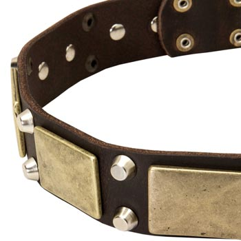 Leather Belgian Malinois Collar with Nickel Studs