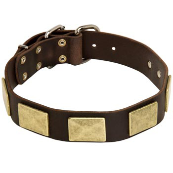 Leather Belgian Malinois Collar with Fashionable Studs