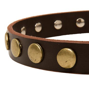 Designer Leather Dog Collar for Walking Belgian Malinois