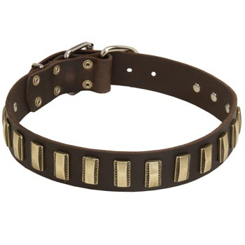 Leather Belgian Malinois Collar Designer for Walking in Style