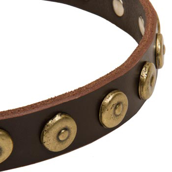 Belgian Malinois Collar with Stylish Circles