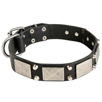 Studded Leather Belgian Malinois Collar