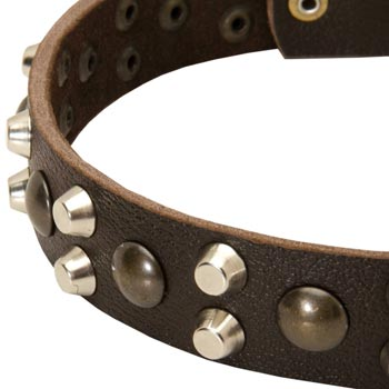 Leather Belgian Malinois Collar with Hand Set Studs
