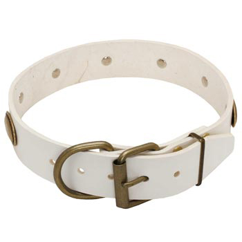 White Leather Dog Collar for Belgian Malinois Stylish Walks