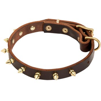 Leather Belgian Malinois Collar with Brass Spikes
