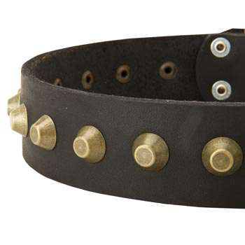 Leather Dog Collar with Brass Pyramids for Belgian Malinois