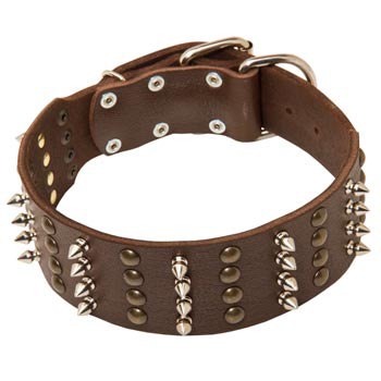 Leather Collar for Belgian Malinois Walking in Style