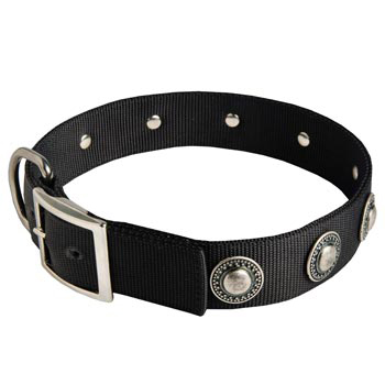 Belgian Malinois Dog Nylon Collar Steel Nickel Plated Conchos