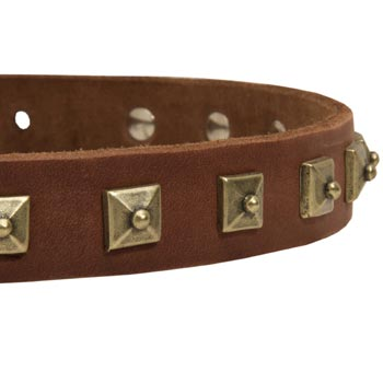 Belgian Malinois Leather Collar With Square  Studs
