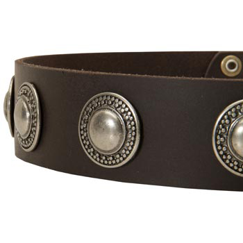 Leather Dog Collar with Conchos for Belgian Malinois