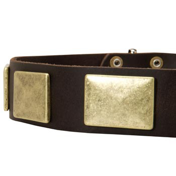 Leather Dog Collar with Massive Brass Plates for Belgian Malinois