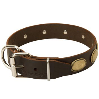 Fashionable Leather Collar for Belgian Malinois