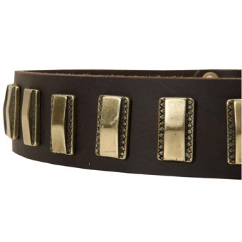 Leather Dog Collar with Adornment for Belgian Malinois