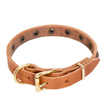 Belgian Malinois Leather Collar with Studs