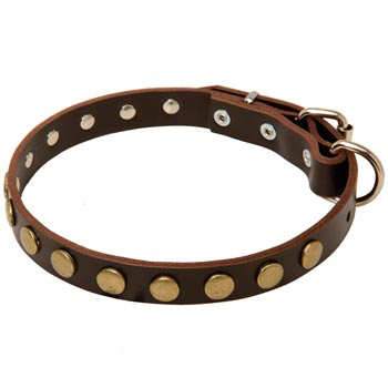 Leather Studded Dog Collar for BREED-NAME Walking