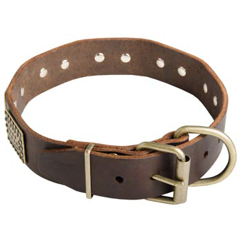 War-Style Leather Collar for Belgian Malinois