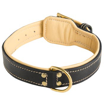 Leather Dog Collar Padded for Belgian Malinois Off Leash Training