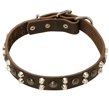 Leather Collar for Belgian Malinois Stylish Walks