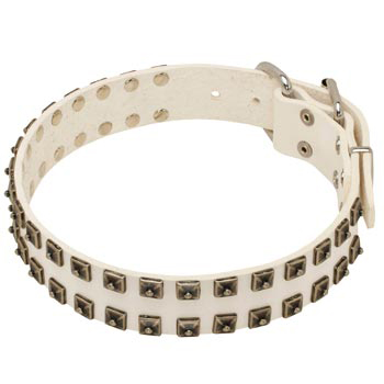 Studded White Leather Dog Collar for Belgian Malinois