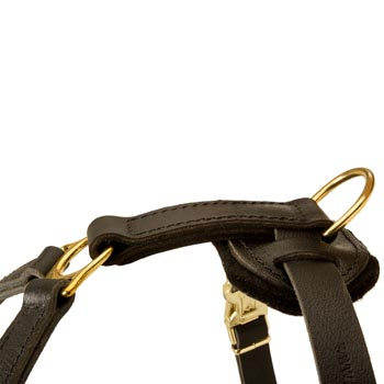Corrosion Resistant D-ring of Belgian Malinois Harness